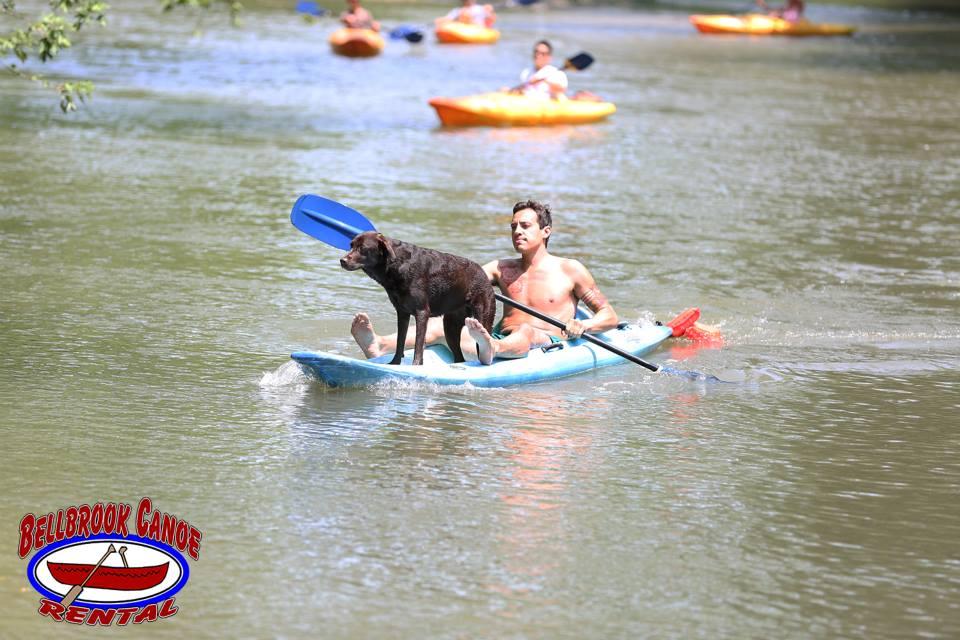 Man in kayak with lab dog