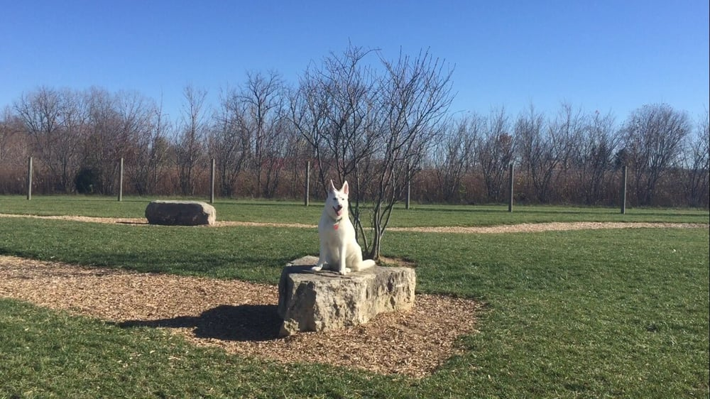 Dog sitting on a rock at Walnut Woods Dog Park