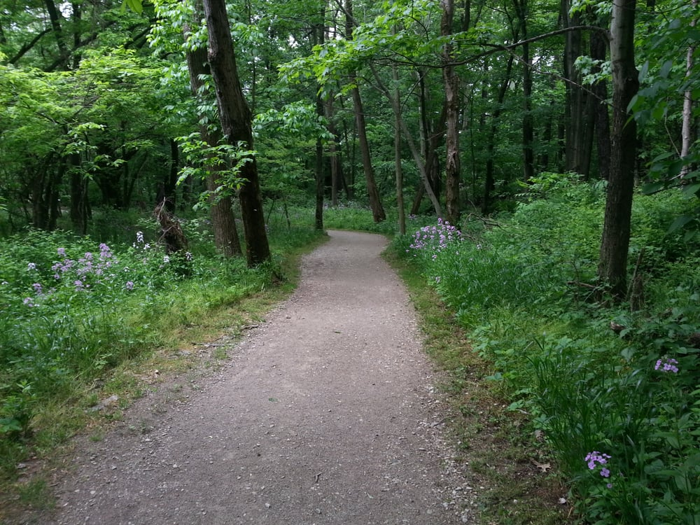 a gravel trail cut through beautiful green forest with small purple flowers lining the path at chestnut ridge metro park in lancaster, OH