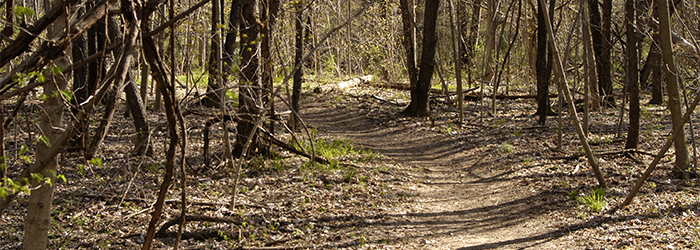 dirt path through woods