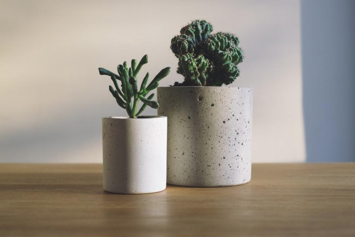 A pair of decorative succulents in stone textured pots