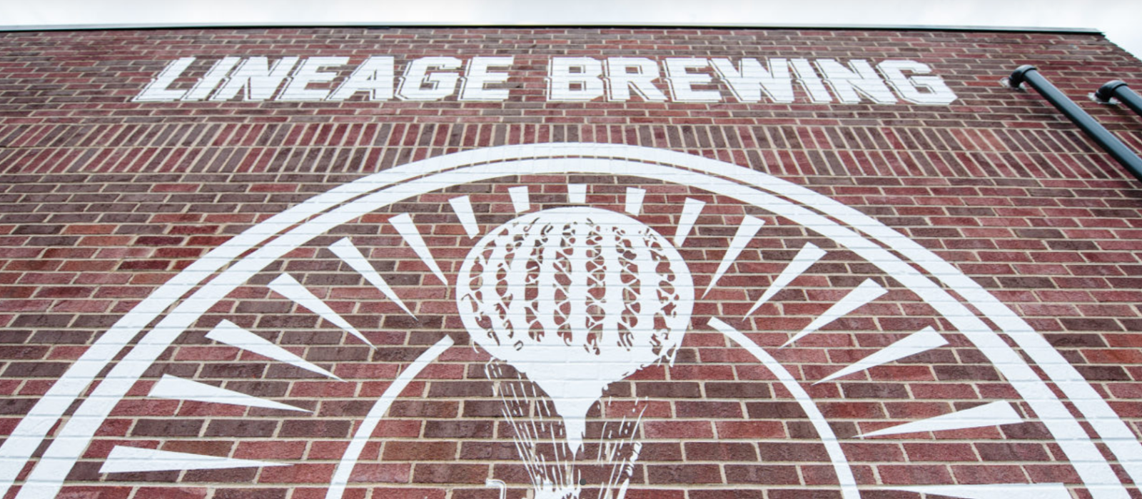 Brick wall emblazoned with Lineage Brewing logo