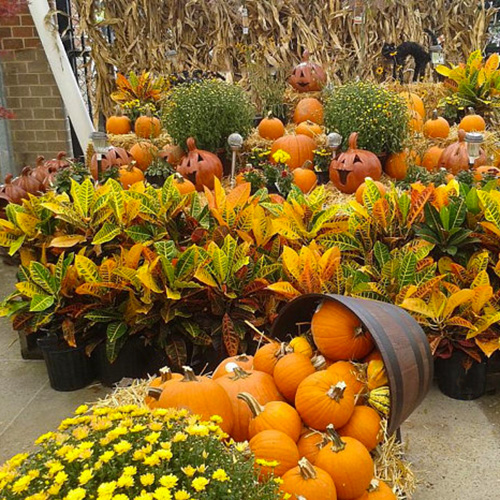 outdoor fall folliage