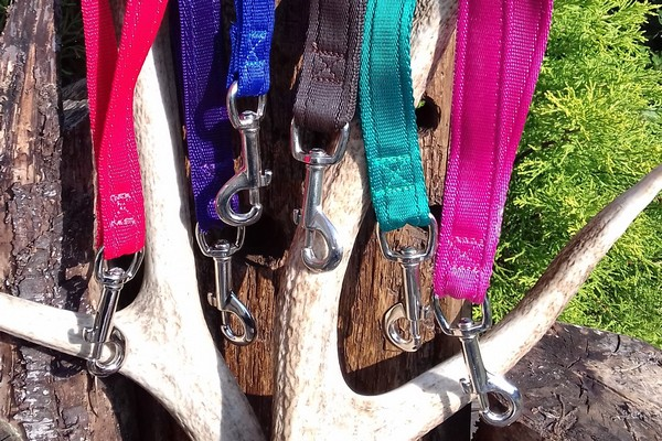 Show Leads & Collars for Dogs | Dragon Leads