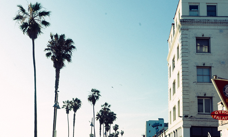 Venice Beach palm trees and buildings