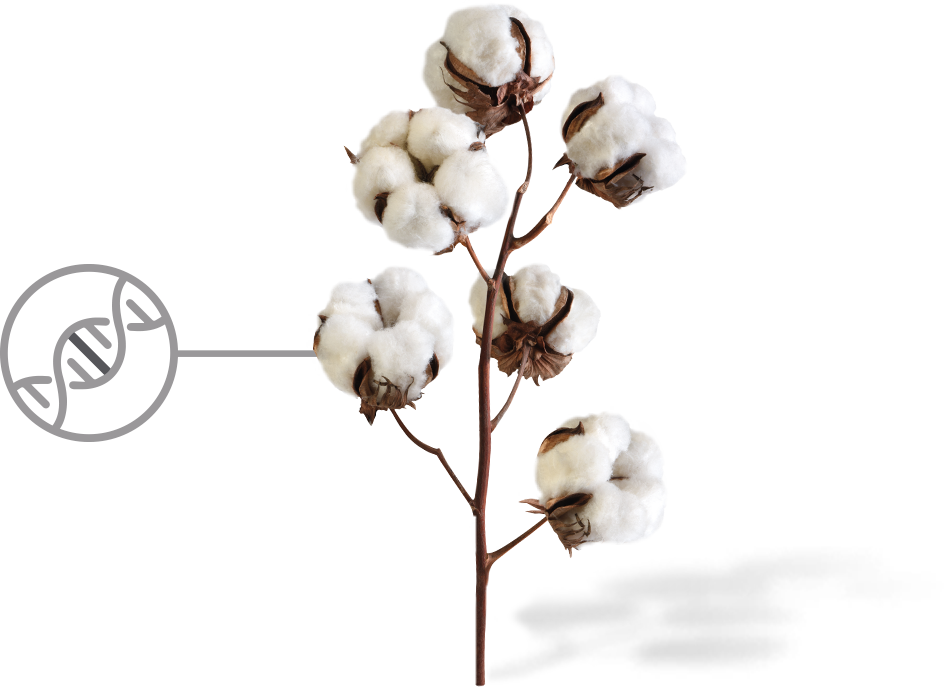 Cotton plant with DNA icon