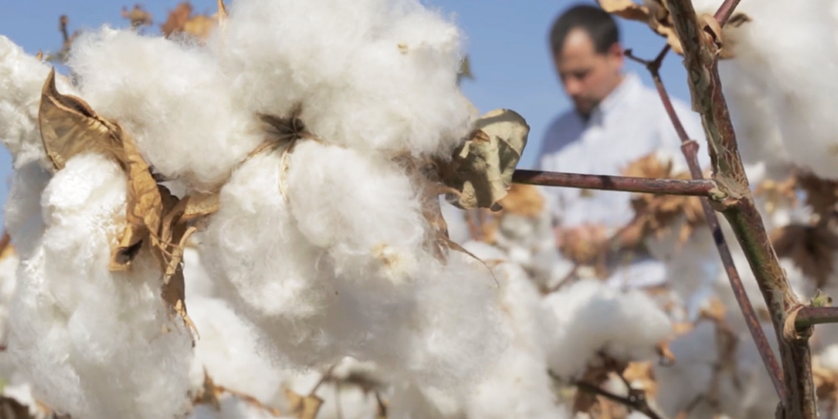 Where Does Pima Cotton Come From?| PimaCott