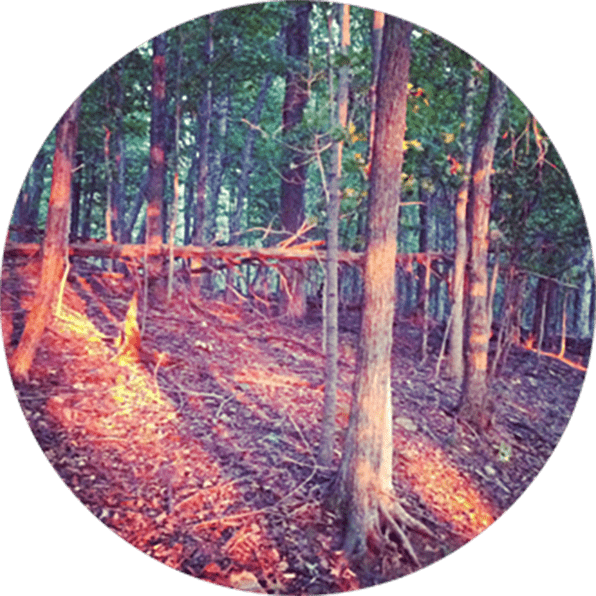 Then Came The Morning Like A Light Through The Tress: Mindfulness Via Meditation