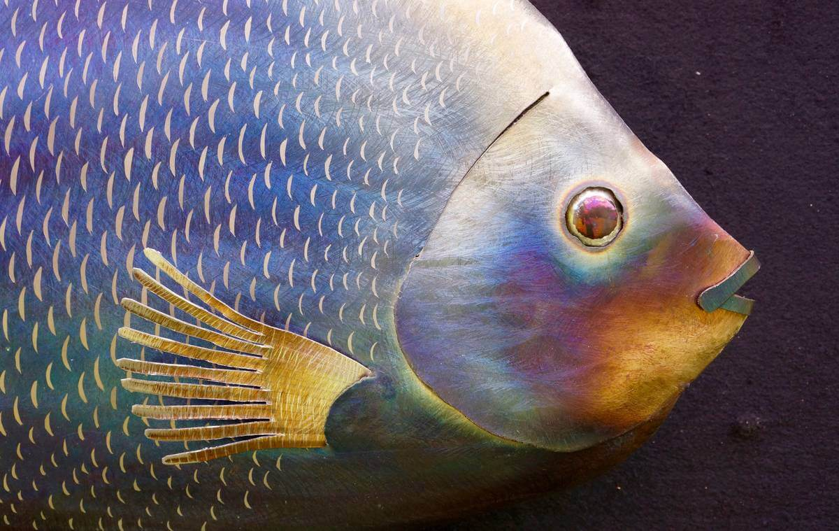 Close up of face of metal saltwater angelfish sculpture