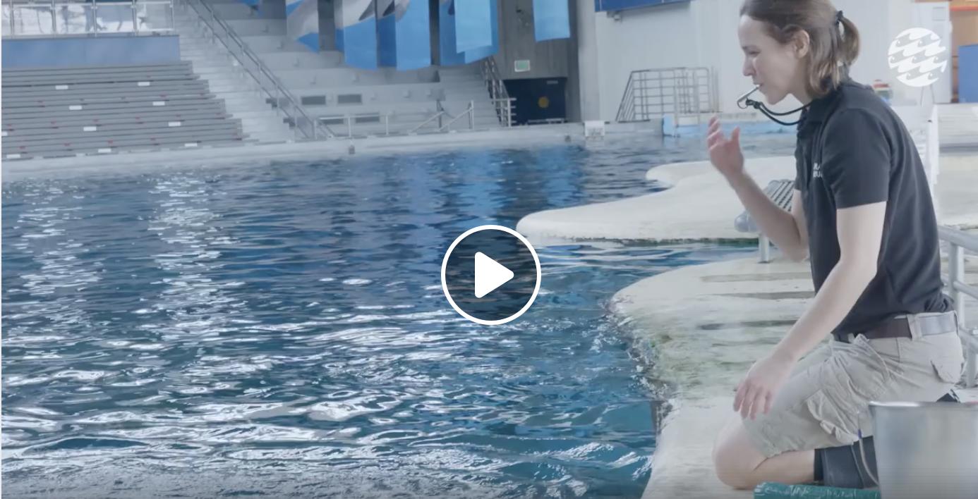 dolphin training video