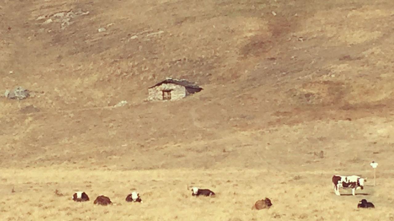 Paisagem de Belino com vacas