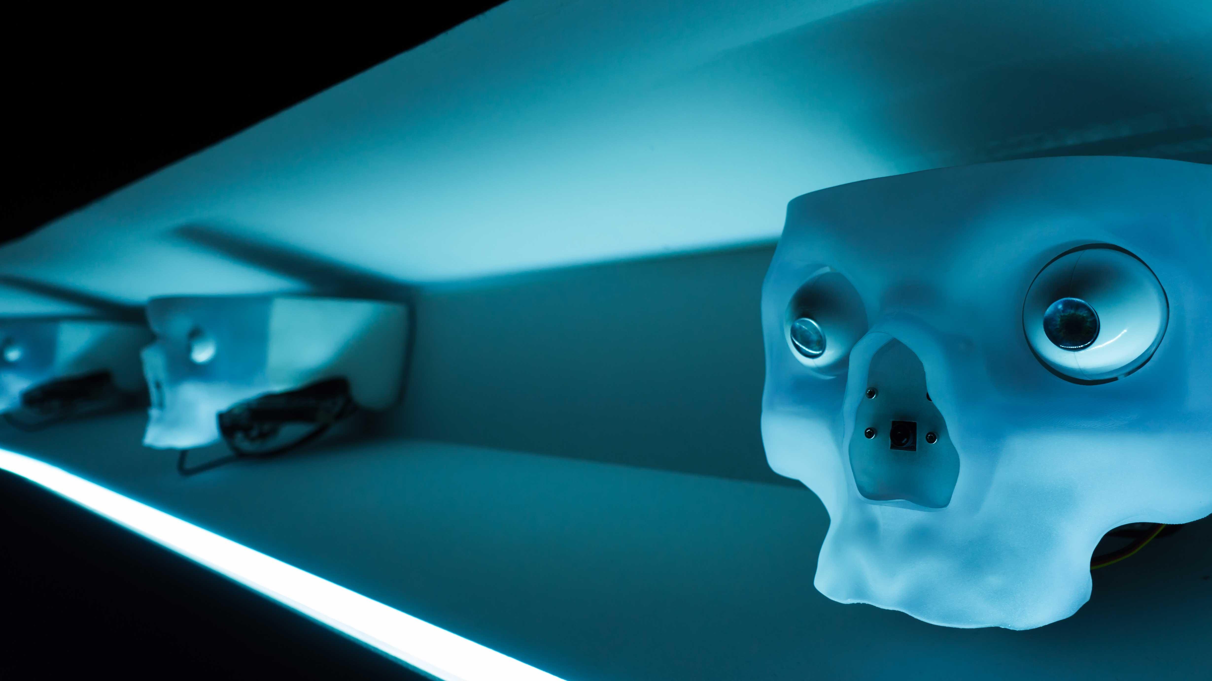 Representações de crânios humanos em prateleiras.