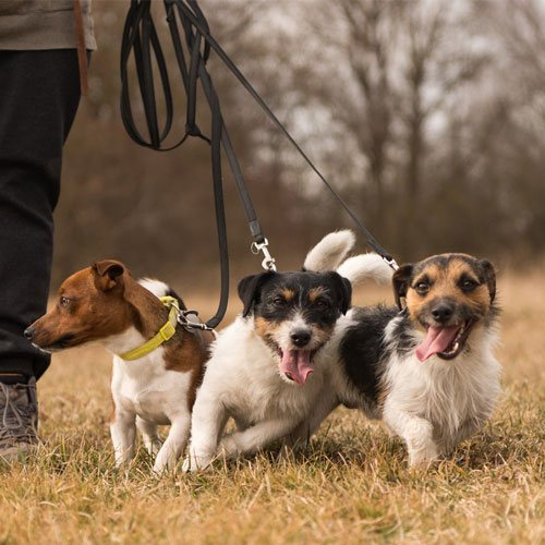 group dogs walks
