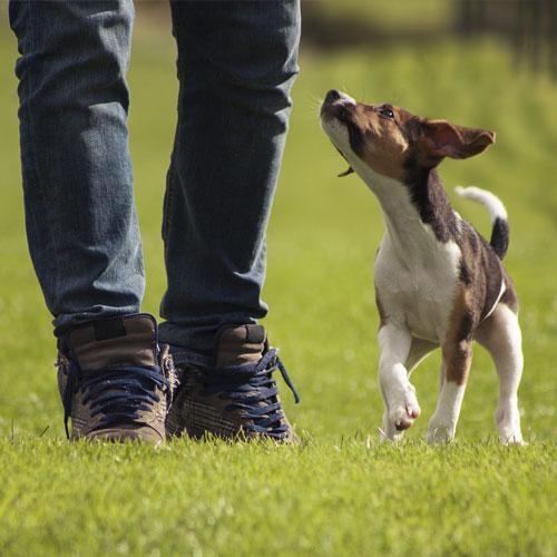 1 hour solo dog walks