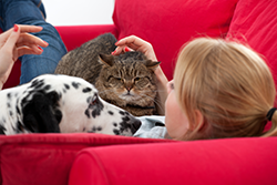 Dalmation, tabby cat and owner lounging on a red couch.