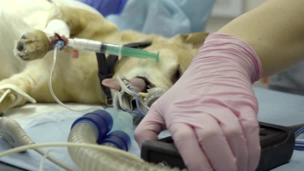 Anaesthesia and your Pet