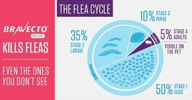 Fleas can be an all year problem