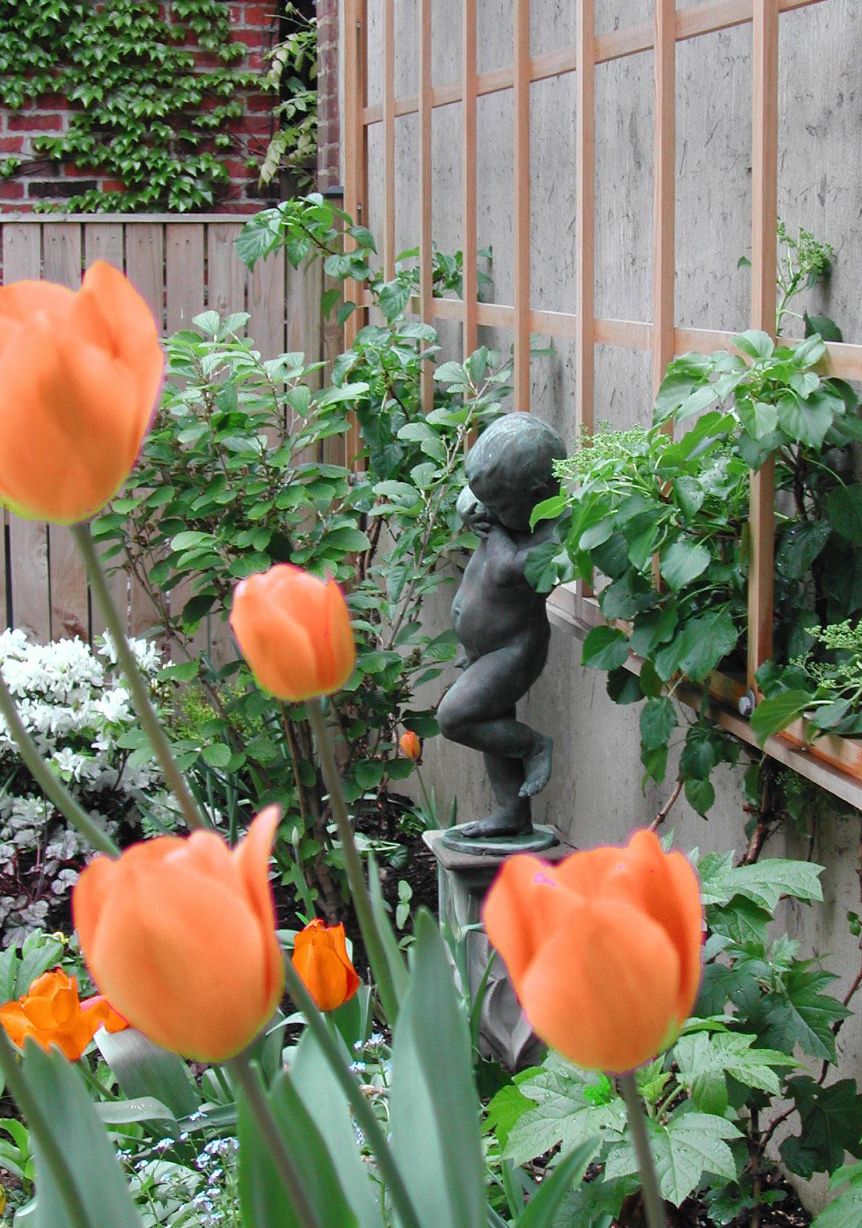 Urban Pocket Garden