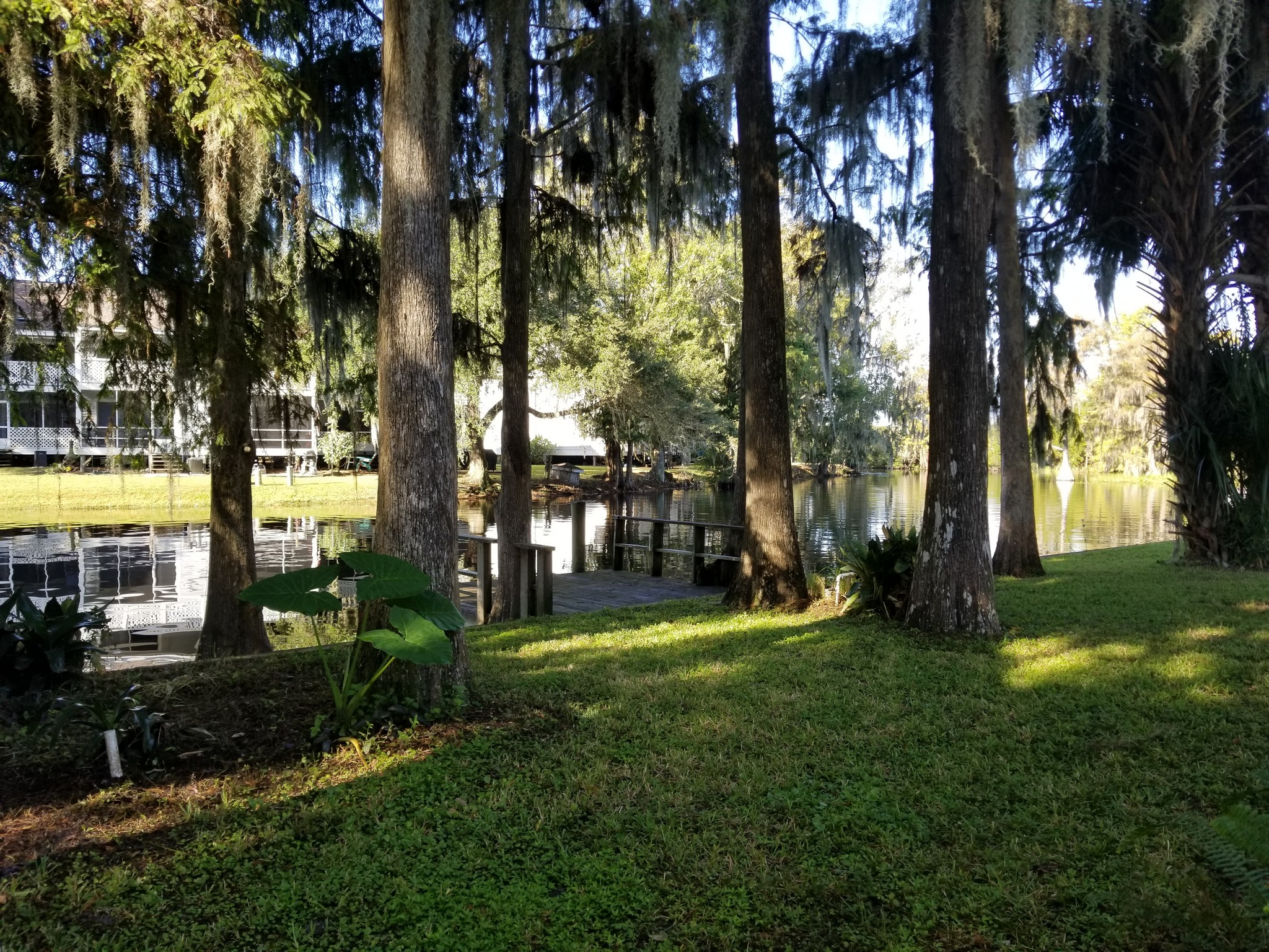 Photo of side yard with a small dock on the water and cypress trees in yard