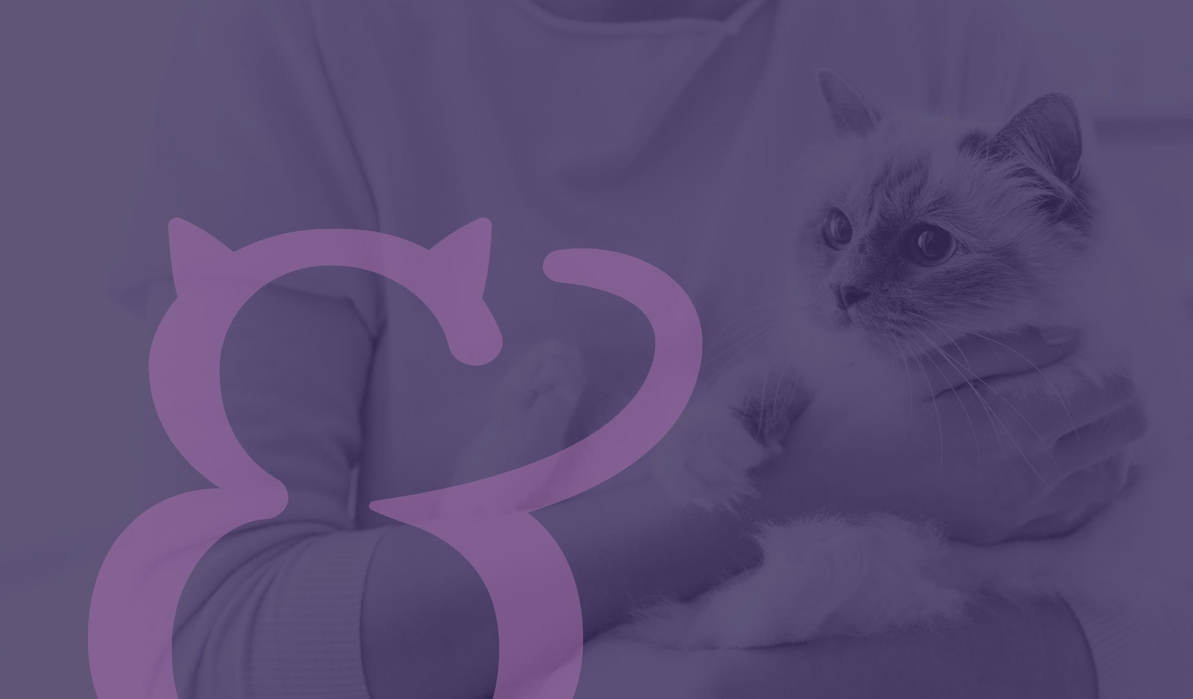 logo design, branding and web design for bristol based cat groomer Preen & Purr
