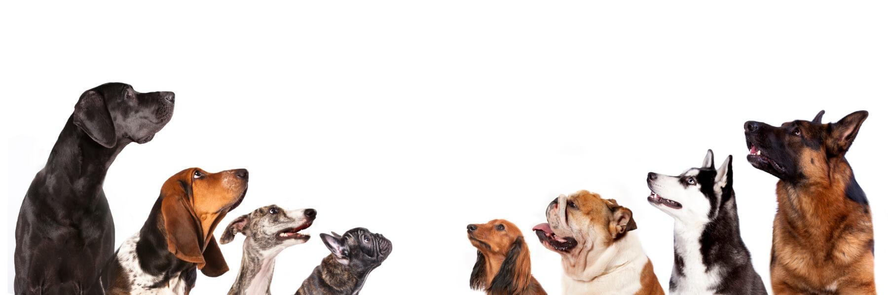 Jacksonville Indoor Dog Park Membership | Outdoor Dog Park