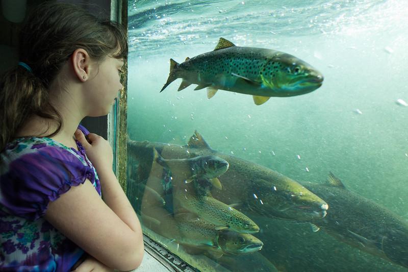 Girl looking at salmon
