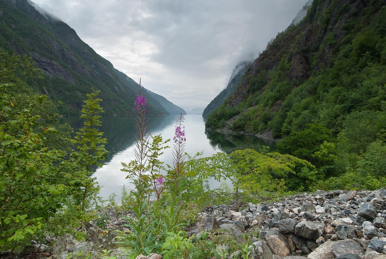 Fjord, fjell og blomar