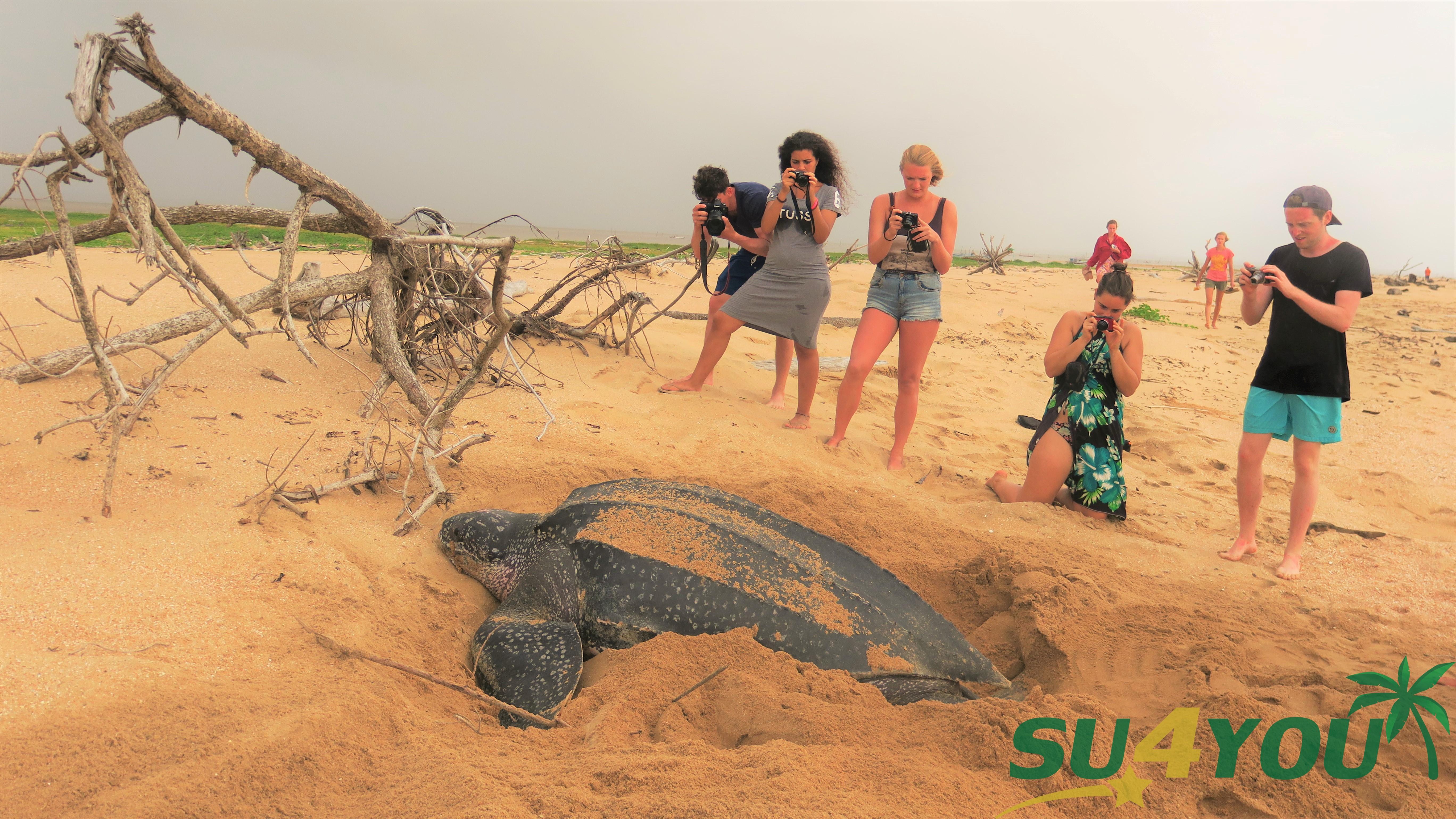 Schildpadden in Suriname - Braamspunt - SUforYou