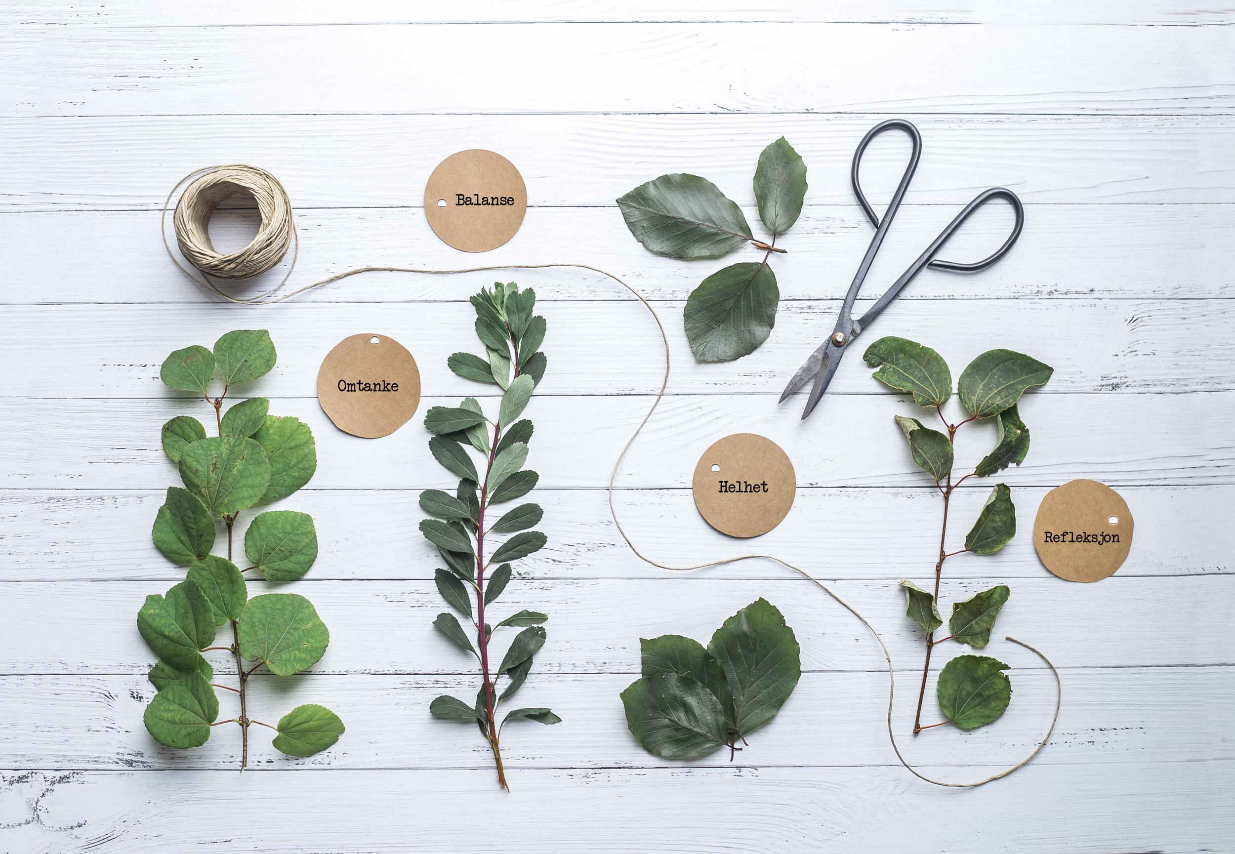 Bilde av planter, hyssing, saks og papirlapper på bord