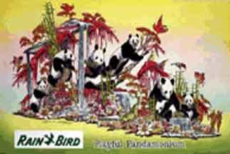 """""""Playful Pandamonium"""""""