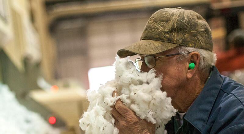 Farmer smelling cotton