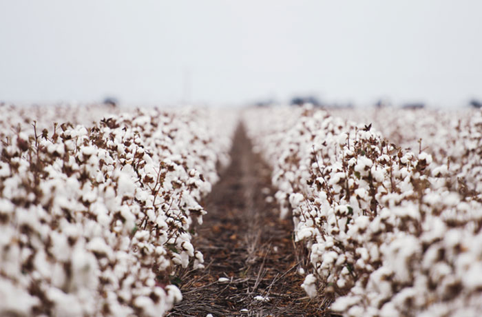 Cotton By The Numbers