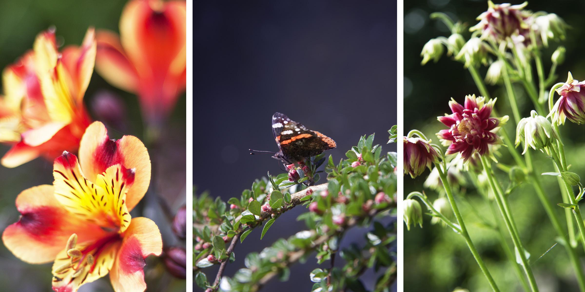 John Hamlin Photography Flowers & Garden