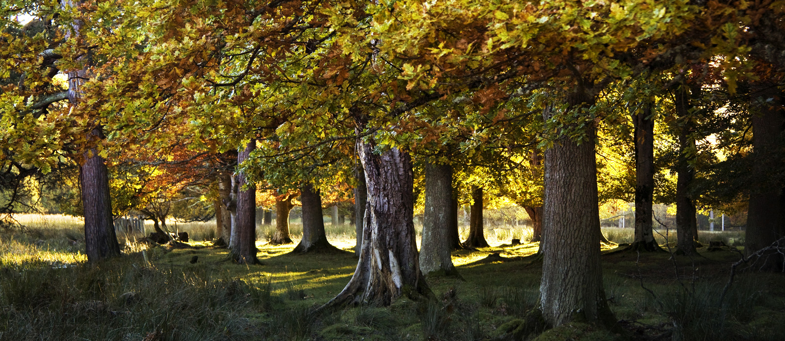 John Hamlin Photography Autumn Woods Stobo