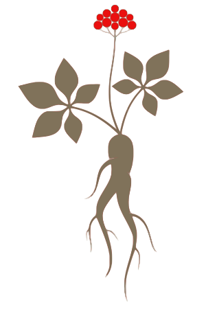 Ginseng root graphic