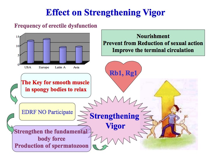 Fermented ginseng effects on strengthening vigor diagram