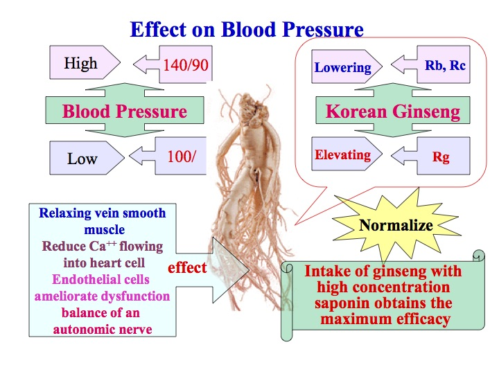 Fermented ginseng effects on blood pressure diagram