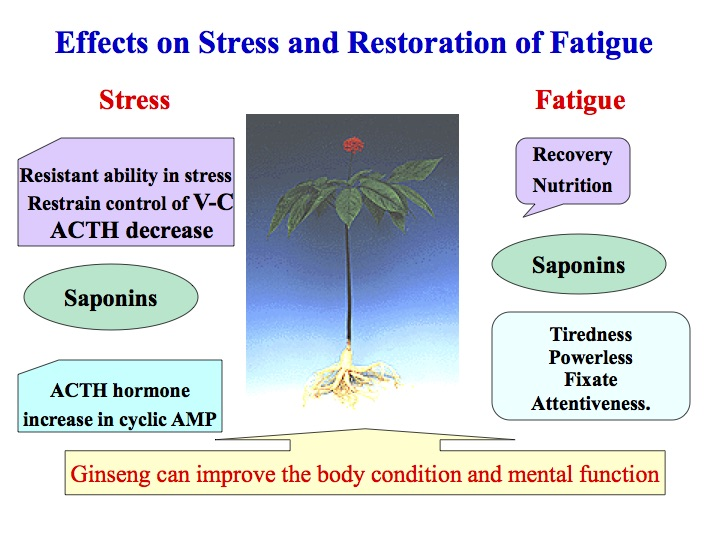 Fermented ginseng effects on stress diagram