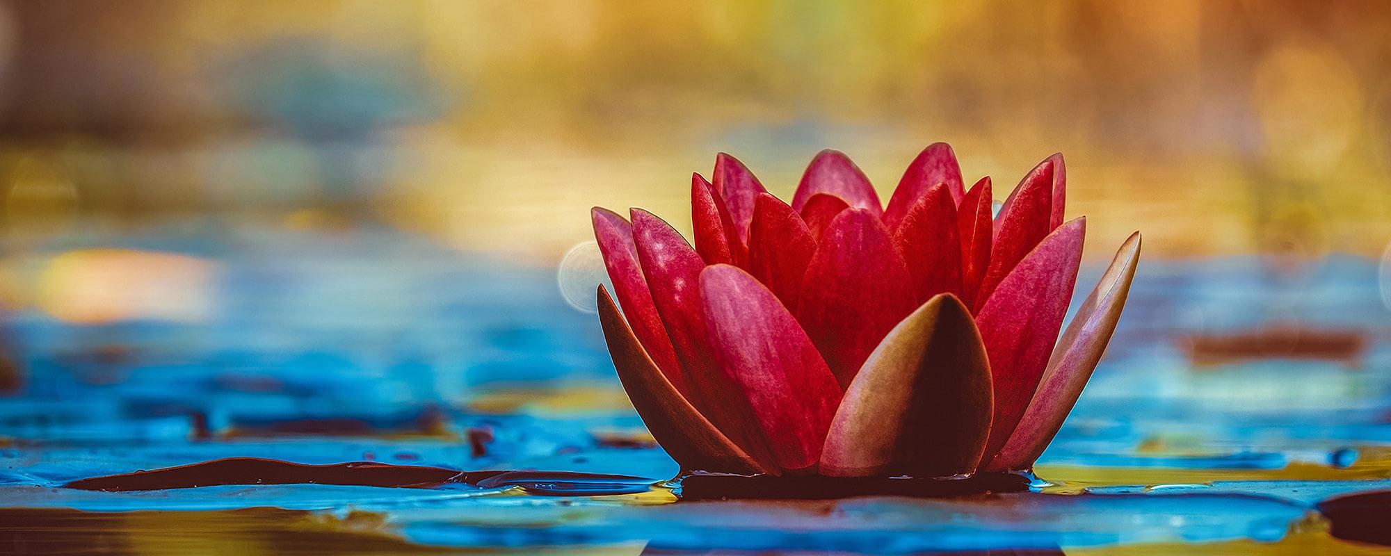 Lotus Borne Perception