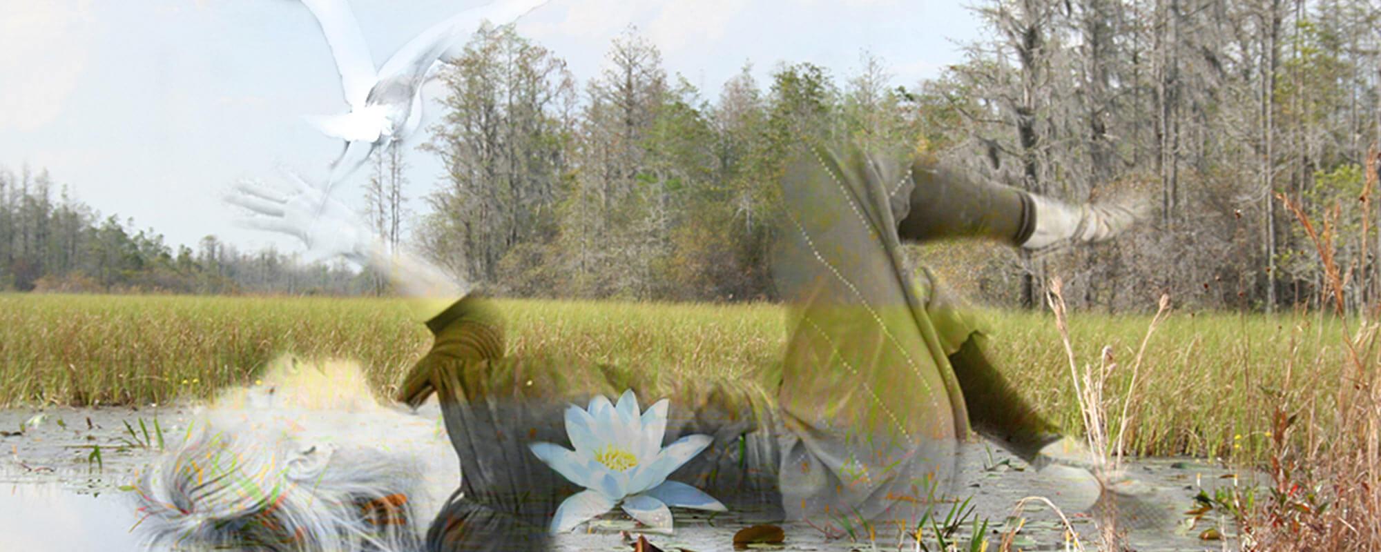 My Body, The Wetland: A Continuum Workshop