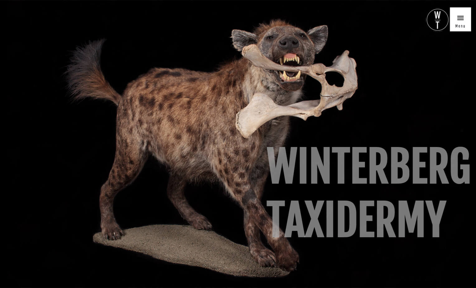 Website Design and photography for Taxidermist