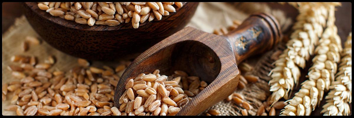 High fibre grains
