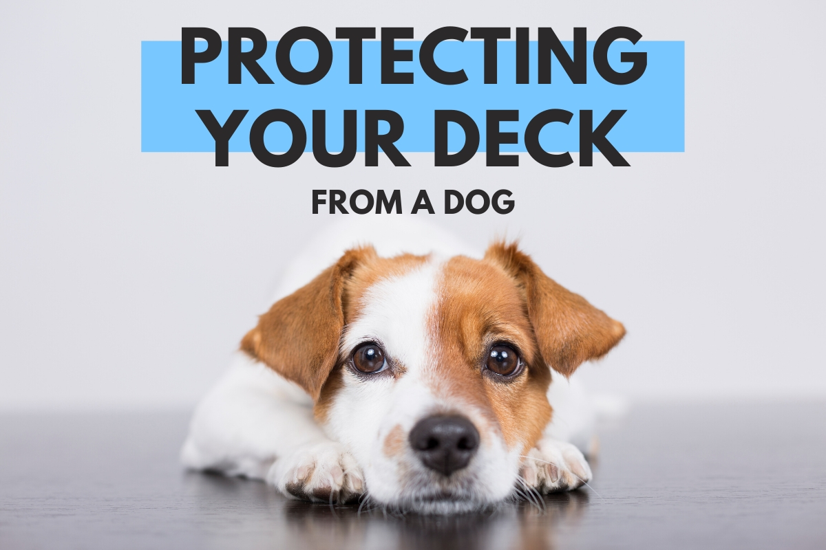 Protecting Your Deck From a Dog - Dog laying on the floor