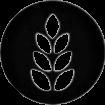 Hvete/Wheat
