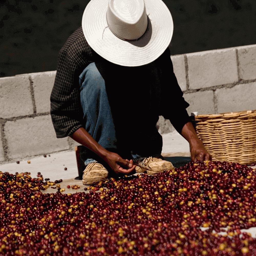 Nicaragua Royal, кофе зерновой арабика