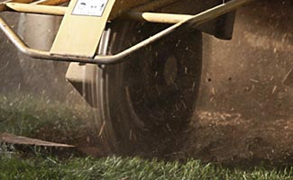 stump grinding service in Cape Coral and Fort Myers Florida