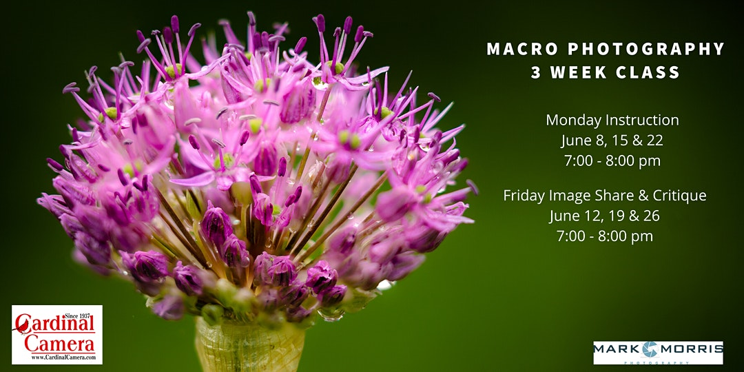 3 Week Macro Photography Class with Mark Morris