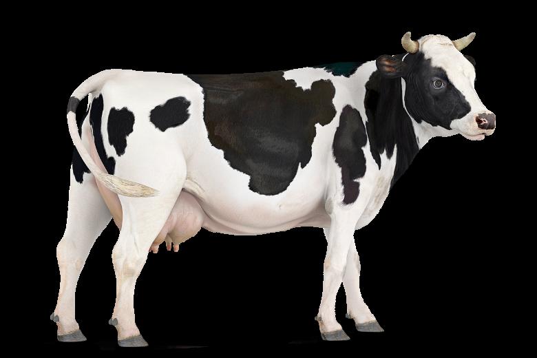 Rumiantes Ajinomoto Animal Nutrition