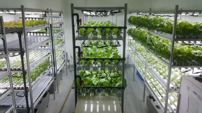Alesca Fresh Container Farm