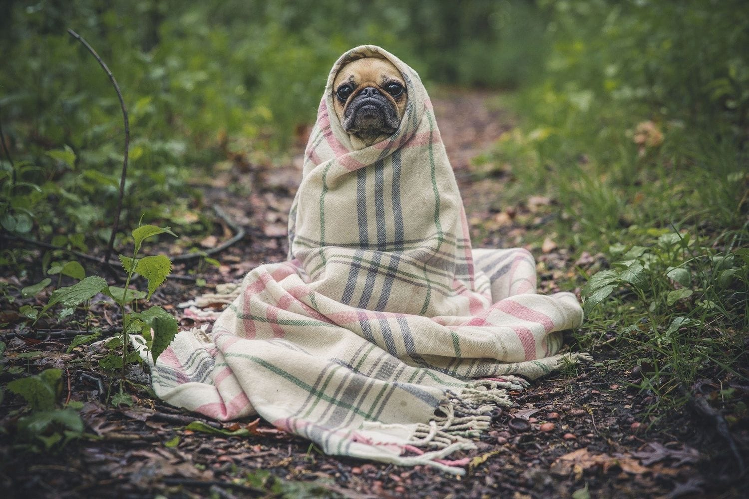 blanket wrapped around a dog in the forrest
